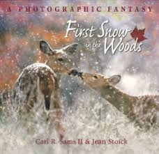 First Snow in the Woods | Scholastic Canada