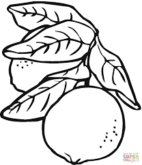 Lime 2 coloring page   Free Printable Coloring Pages