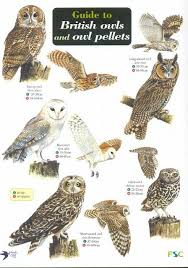 Id Chart Guide To British Owls