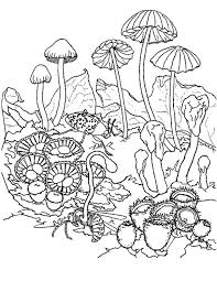 Small Picture Mushroom clipart to color collection