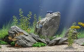 Tapete Aquarium Bergerak Fenster 7 ...