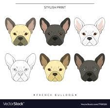 French Bulldog Color Chart French Bulldog Color Goldenacresdogs Com