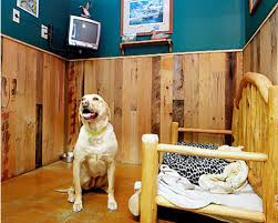 Lucky dogs daycare provides supervised play areas and interaction in a safe indoor play environment. Premium Dog Boarding In The Greater North Lake Tahoe Area
