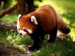 HD wallpaper Cute Animal Wallpapers For ...