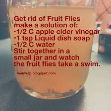 Small Gnats In Kitchen Gnat Trap 1 3 C Apple Cider Vineagar 2 Tsp Water 1 Drop Dawn