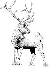 Small Picture Gorgeous Elk Deer coloring page Free Printable Coloring Pages