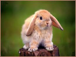 Other Hare Young Cottontail Log Bunny Easter Sitting Cute Cool ...