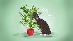 ilration for article titled the best low maintenance pet friendly houseplants