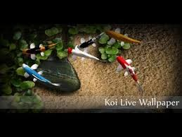 free download koi live wallpaper for android tablet. koi live wallpaper for android. free download tablet and phone. android
