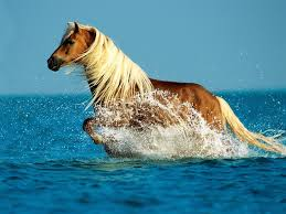 Palomino Horse Hd Wallpaper Free Hd Downloads