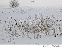 放棄された農地の雪景色の写真素材 37946752 Pixta