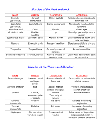 Muscle Action Chart Muscle Chart