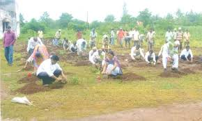 tree plantation the taste of  tree plantation