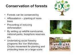 forest conservation essays