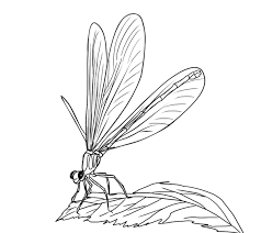 Small Picture FREE Dragonfly Coloring Page 12