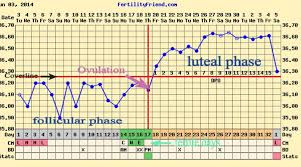 Reading Bbt Chart Basal Body Temperature Chart Bbt Chart For Ovulation
