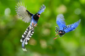 chọn nuôi chim cảnh