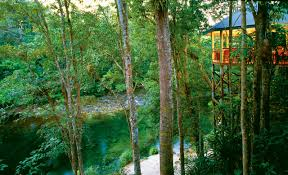 The Tree House Pearl Beach A Pearl Beach House  StayzTreehouse Accommodation Nsw