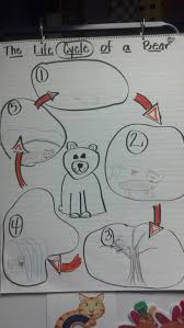 similiar polar bear life cycle keywords polar bear life cycle diagram polar image about wiring diagram