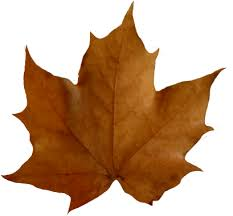 Image result for leaf clip art free