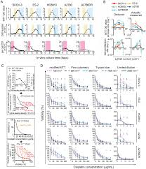 65 Skillful Cell Seeding Density Chart