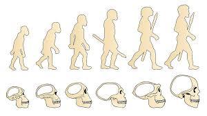 Origen y evolución del hombre: resumen