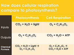 38 how does cellular respiration compare to photosynthesis