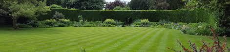 lawn maintenance garden maintenance maintenance