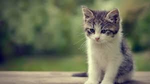 1920x1080 hd pics photos cute cat attractive kitten nice beautiful hd quality desktop background wallpaper