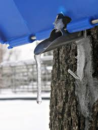Sap To Syrup  The Documentary ReviewsBackyard Maple Syrup