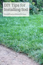 Diy Sod How To Choose And Lay Sod Simple Practical Beautiful