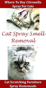 spray to keep cats away from furniture keep cats away spray to with water for spray to keep cats away from furniture