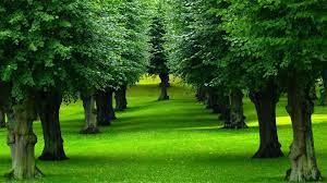 Beautiful Trees Nature Landscape ...