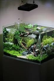 Cool Aquariums Best 25 Small Fish Tanks Ideas On Pinterest Aquatic Plants