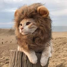 Pet <b>Funny Hood</b> Costume Lion Mane Cat Wig <b>Halloween</b> Dress Up ...