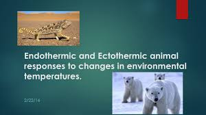 Endothermy Vs Ectothermy Venn Diagram Endothermic And Ectothermic Animal Responses To Changes In
