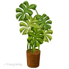Tropical plant clip art - Philodendron painting, Original Art Download, tropical  potted plant art