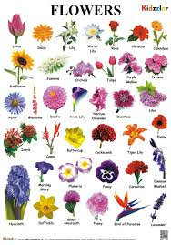 Buy Flower Chart Book Online At Low Prices In India Flower