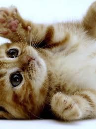 Ipad Wallpaper Kitten