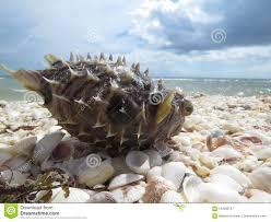 Red Tide Sanibel Island Florida Stock Image Image Of Dead