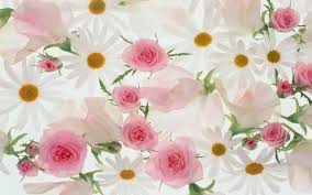 beautiful flowers with white background