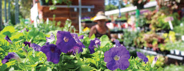 the natural gardener in southwest austin s various flowers plants and herbs