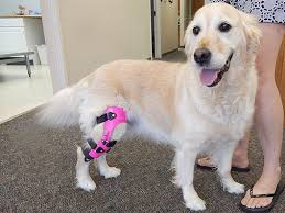 valgus dog. dog acl brace from my pet\u0027s valgus