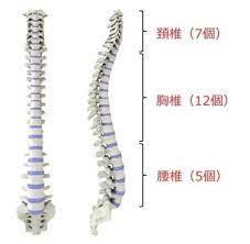 腰椎 圧迫 骨折