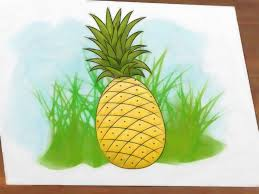 pineapple drawing color. pineapple drawing color w