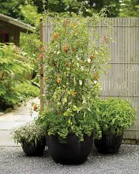 51 Best Container Tomatoes Images On Pinterest  Gardening Tips Container Garden Plans Tomatoes