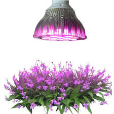 Growing Orchids Under Led Lights Us 11 74 19 Off E27 Greenhouse Led Grow Light 15w 21w 27w 36w 45w 54w Led Grow Lamp For Plants Flower Plant Orchids Seedlings Hydroponics System In