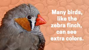 Image result for Zebras can't see the color orange.