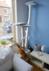 cat tree room he pulls a tree into his living room the reason