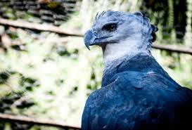 """Résultat de recherche d'images pour """"oiseau majestueu bleu"""""""